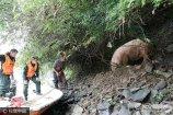 2017年6月26日,江西省修水县义宁镇安坪村,正在此执行搜寻任务的九江消防支队官兵接到梁荣成老人求助,在一处湿滑狭窄的河边,发现了自己家里的一头300斤重的母猪。