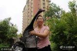 16日晚11点半左右,家住东营经济技术开发区原香小镇的孙女士在去上夜班路上,在徐州路和大渡河路路口路边绿化带里发现一只黑天鹅。