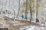 2017年10月12日,北京怀柔喇叭沟门白桦林美丽秋景,吸引游客前来游玩。