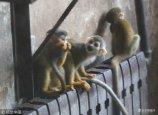 """2017年12月5日山东济南,受冷空气影响,最近温度明显降低,济南动物园的动物们使出各种""""御寒术"""",萌态十足。猴子们抱团趴在暖气上取暖。"""