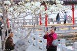 2018年03月13日,济南大明湖,春风杨柳玉兰花开,春的气息扑鼻而来。