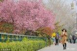 2018年3月22日,山东济南各景区樱花、桃花、杏花争相开放,繁花似锦,春景醉人,游人纷纷拍照留念、流连忘返。