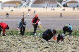 018年4月16日,人们在青岛八大关海滨赶海。当日是农历三月初一大潮汛,许多人趁退大潮时来到八大关海滨赶海。