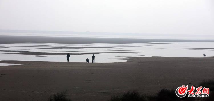 潍坊滨海盐碱滩涂生态保护美如画.大众网记者 曹亮 摄