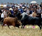 仡佬族牛王节