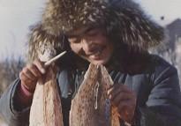 七八十年代赫哲族人制作鱼皮的情景