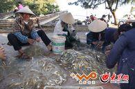 京族人靠海吃海