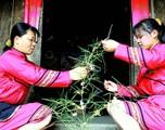 毛南族节俗 丰收树