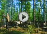 与驯鹿相依为生的鄂温克族人(一)