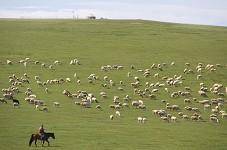 东日布家的六万亩草场