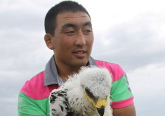 刚孵化十多天的草原鹰