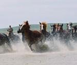 蒙古族的游牧传统