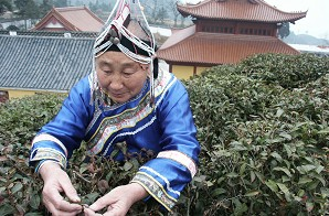 蓝陈契大妈的茶园在惠明寺前