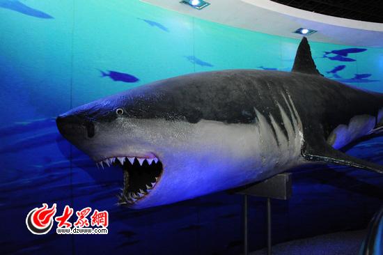 位于青岛汇泉湾畔,它整合了青岛水族馆,标本馆,淡水鱼馆等原有旅游