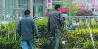 青岛辽阳西路护栏缺口达10处 行人横穿事故频发