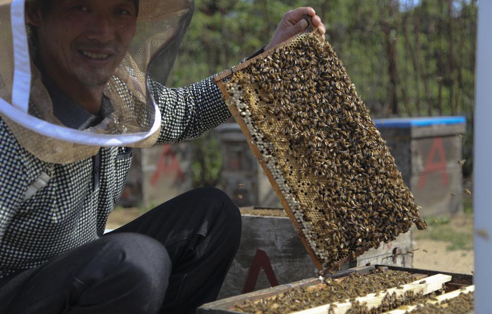 都是在酿造甜蜜的生活。我们说话间,养蜂人被蛰了一下,他稍微哆嗦了一下继续说到:一年就是跟着花季跑,苦啊甜啊,习惯了都不觉着啥了。