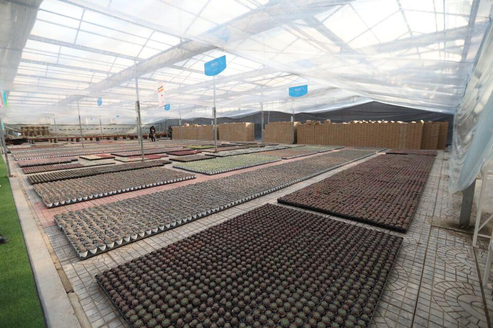 看直播就能在线买花 青州花卉创业园把鲜花卖到全国