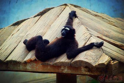 动物百态---西霞口野生动物园