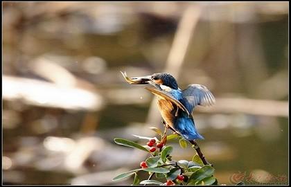 泉城公园 翠鸟