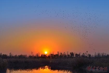 日落鸟归巢