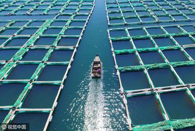 烟台:木排浮箱点缀海面 海上粮仓美如画