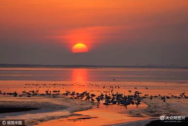威海:数万只大天鹅荣成天鹅湖越冬