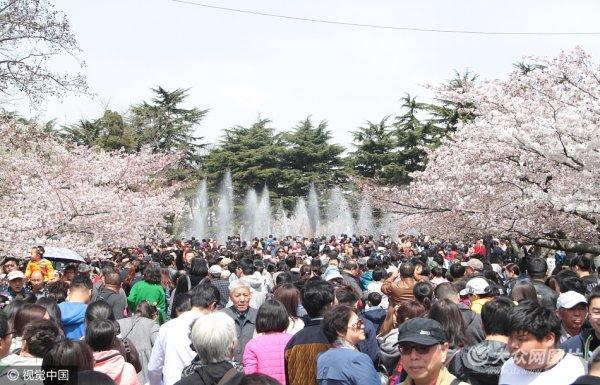 青岛四月艳阳天 赏樱大军挤爆中山公园