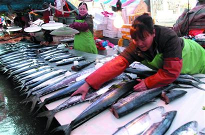 青岛海鲜市场需求大 渔船无奈南下收鱼(图)