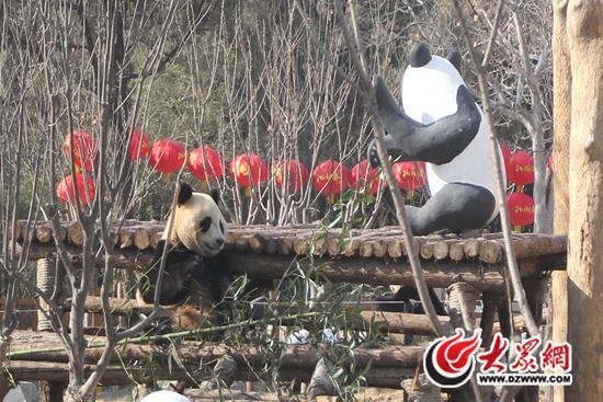 """济南动物园""""马""""主题过年"""