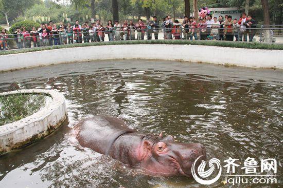 郭玲)记者今天从济南市动物园获悉