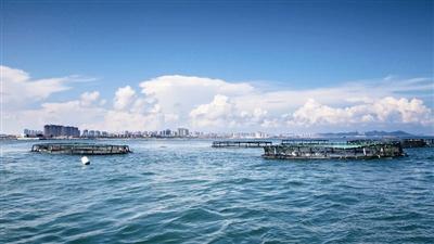 【青岛经略海洋②】海参,鲍鱼,好生态,一个都不能少