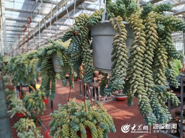【乡村振兴齐鲁行】打破传统农业