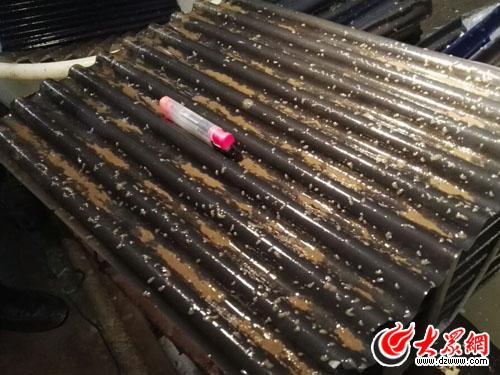 一只海参幼苗要一年时间才可长成打火机大小