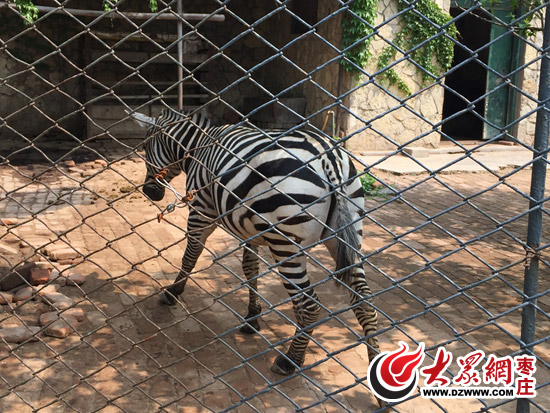 如今这些动物们生存状况并没有随着社会发展得到改善,令网友唏嘘不已.