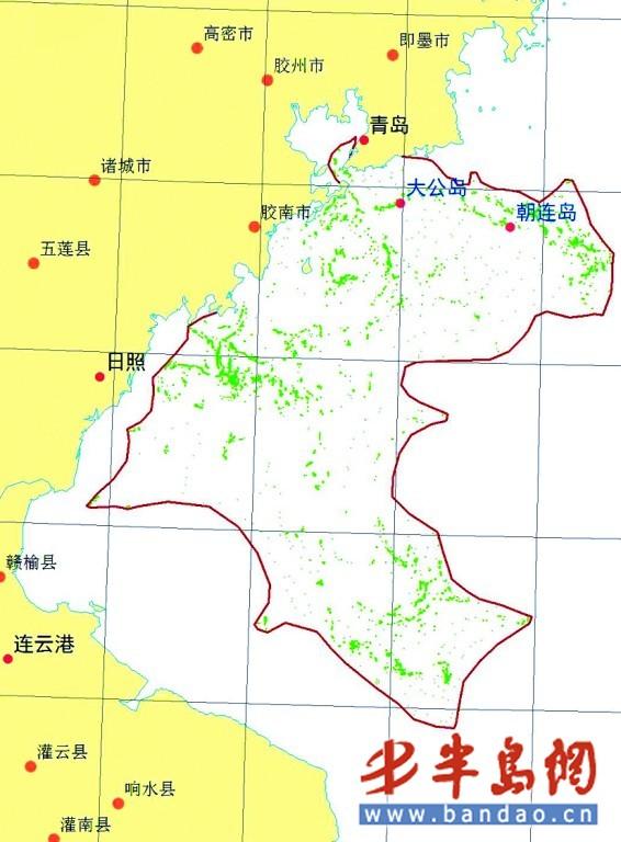 浒苔最北端侵入胶州湾 将借南风加速北上图片
