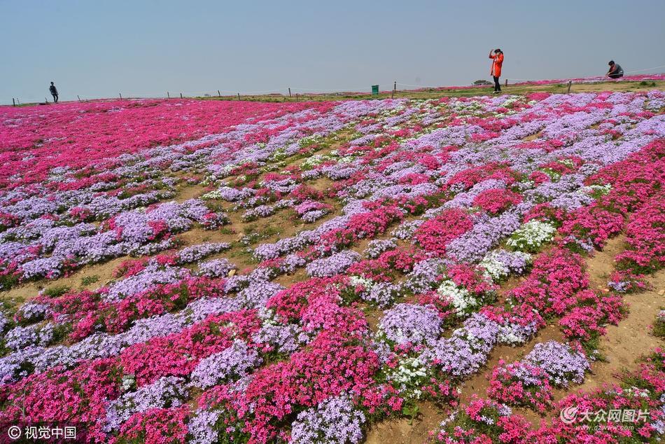 2016年4月19日,山东省日照市,航拍东港区花仙子风景区盛开的花海.