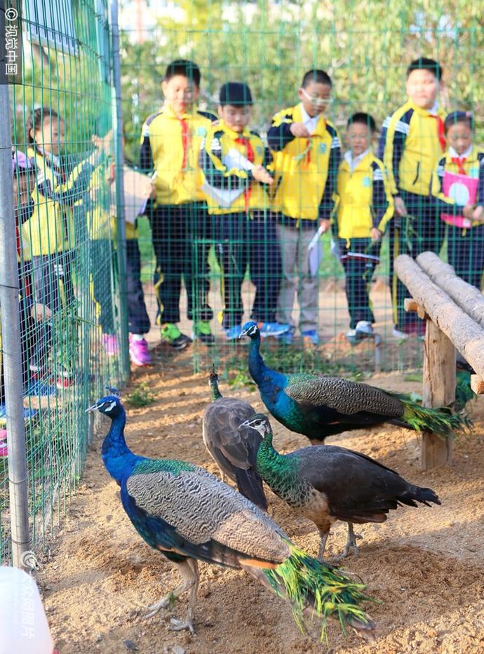 """青岛:校园建""""动物园"""" 30余种动物萌萌哒"""
