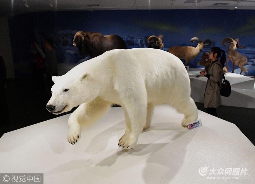 秒穿野生动物世界 400多野生动物标本落户青岛