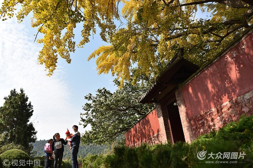2017年10月31日,山东日照,莒县浮来山风景区内千年银杏树下,一名游客