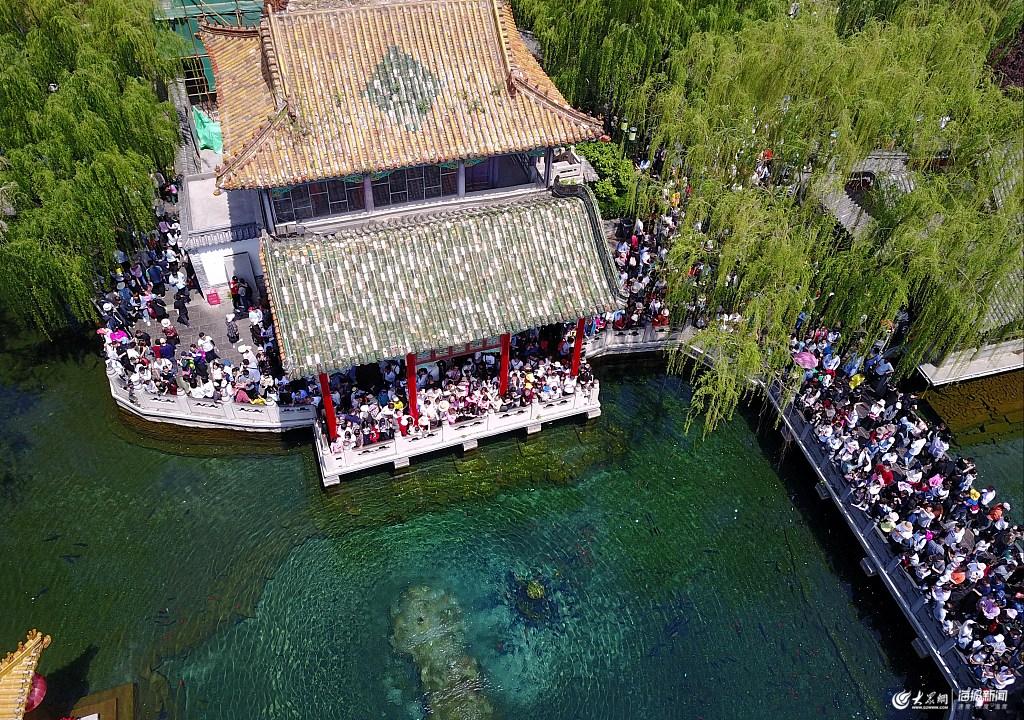 航拍济南名胜趵突泉 五一假期迎各地游客前来观赏图片
