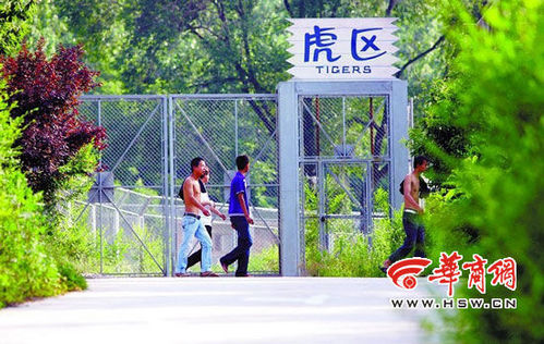 西安秦岭动物园老虎咬死游客 死者儿子获救