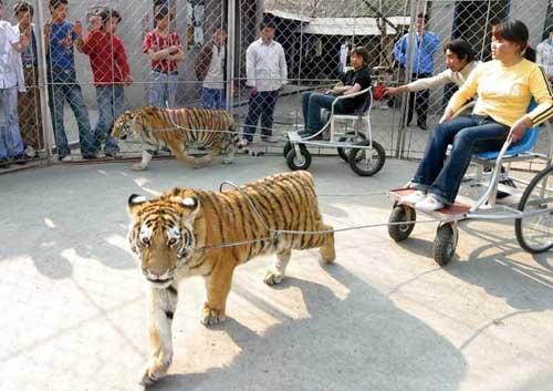 民营动物园被指屠宰场 10年饿死逾五百只动物