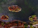 11月16日,在济南西二环森林公园内,航拍冬日未褪去的秋色,恍若仙境一般,如诗如醉,十分迷人。