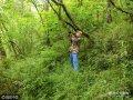 12月14日,位于卧龙的天台山野化培训中心又迎来了两队参训的熊猫母子,喜妹和八喜就是其中一对。韦华说,他曾在中国大熊猫保护研究中心碧峰峡基地当饲养员,与喜妹有过数月的亲密接触。