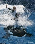 道恩・布兰琪(Dawn Brancheau)是奥兰多海洋世界主题公园的一名动物驯养师。公园里有一只小逆戟鲸纳拉尼(Nalani)和她关系十分亲密,在每天的表演前后她们都经常在一块嬉戏。