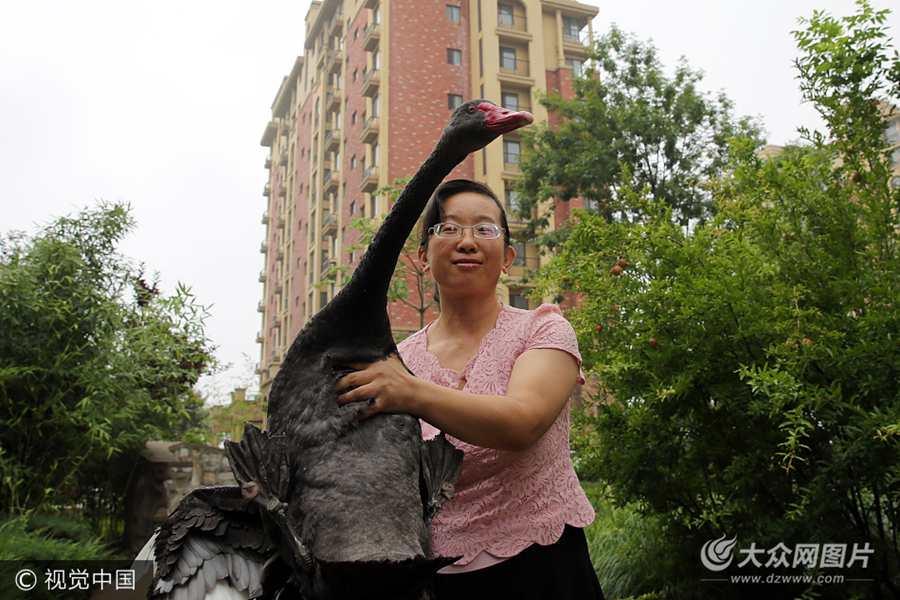 东营市民走夜路捡只黑天鹅