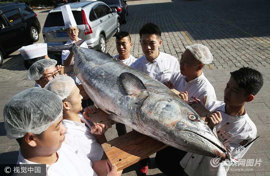 青岛:饭店收购超大鲅鱼  身长2米多重达178斤