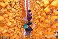 深秋时节,山东省沂源县5万亩柿子迎来收获季,农民们忙着采摘柿子、加工柿饼,一派红火的丰收景象。