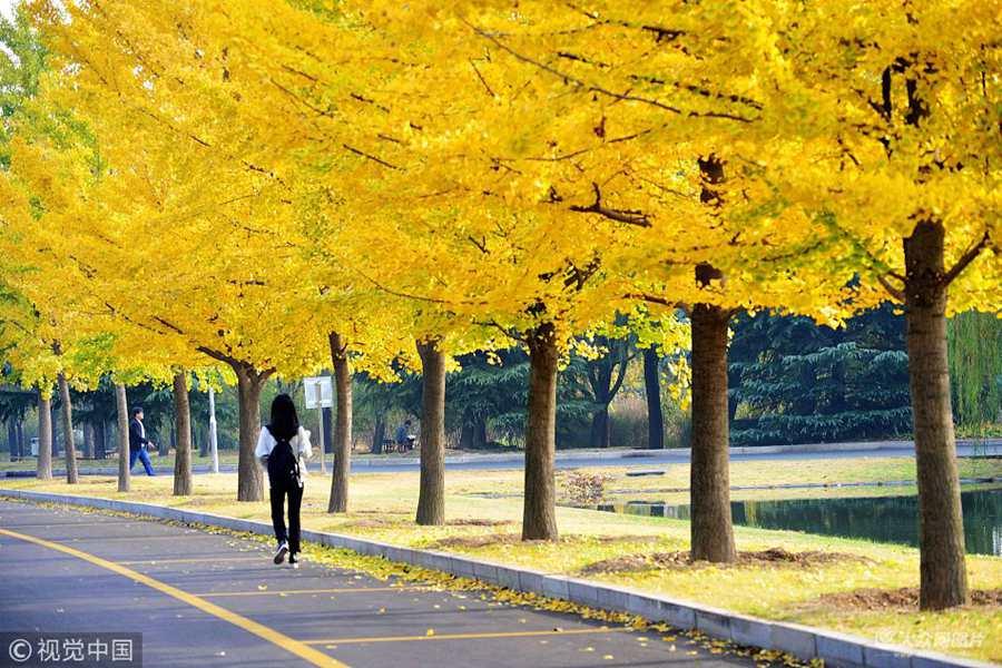 青岛:立冬节气至 秋色仍浓郁