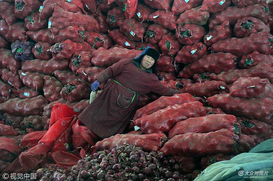 济南:老人进城分拣蔬菜 一天装菜万斤赚80元